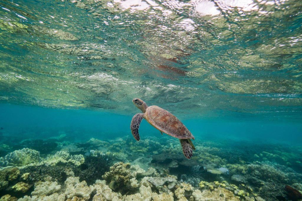 Sea Turtles can be seen at Navy Pier in Exmouth, Australia