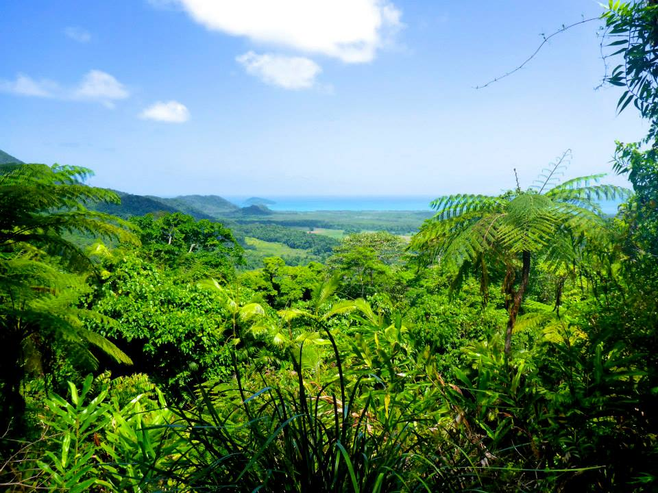 A lush forest view of Cape Tribulation, Australia